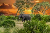 Südafrika_032019